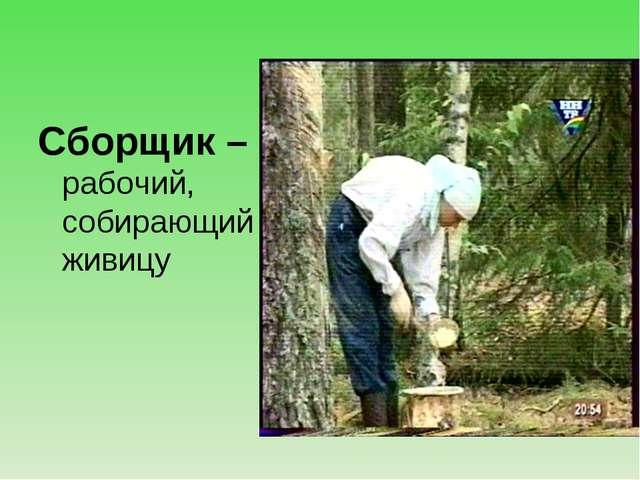 Сборщик – рабочий, собирающий живицу