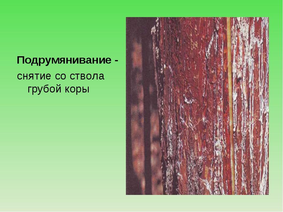Подрумянивание - снятие со ствола грубой коры