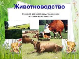 Основной вид животноводства мясное и молочное животноводство