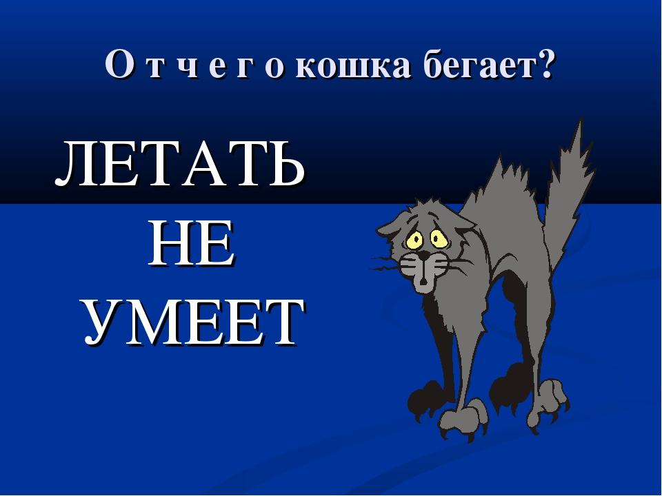 О т ч е г о кошка бегает? ЛЕТАТЬ НЕ УМЕЕТ