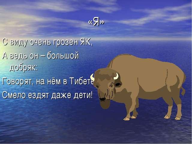 «Я» С виду очень грозен ЯК, А ведь он – большой добряк: Говорят, на нём в Тиб...