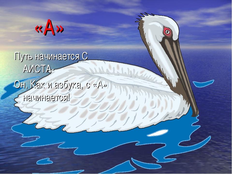 «А» Путь начинается С АИСТА- Он, Как и азбука, с «А» начинается!