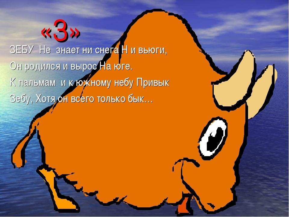«З» ЗЕБУ Не знает ни снега Н и вьюги, Он родился и вырос На юге. К пальмам и...