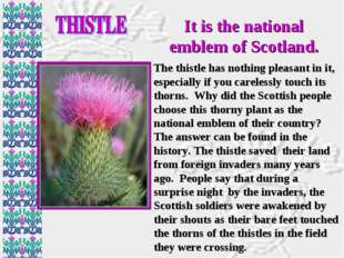 It is the national emblem of Scotland. The thistle has nothing pleasant in it