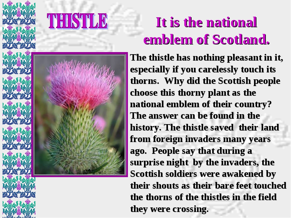 It is the national emblem of Scotland. The thistle has nothing pleasant in it...