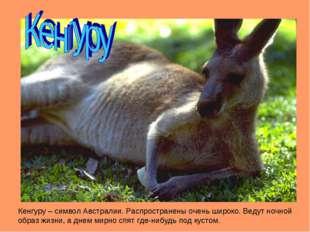 Кенгуру – символ Австралии. Распространены очень широко. Ведут ночной образ ж