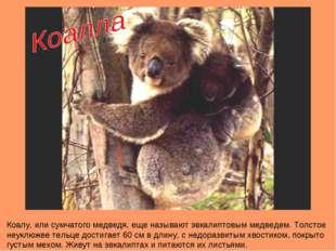 Коалу, или сумчатого медведя, еще называют эвкалиптовым медведем. Толстое неу