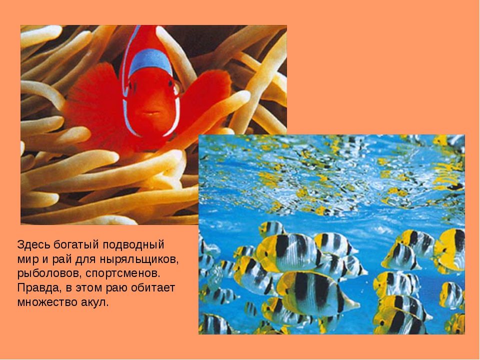 Здесь богатый подводный мир и рай для ныряльщиков, рыболовов, спортсменов. Пр...