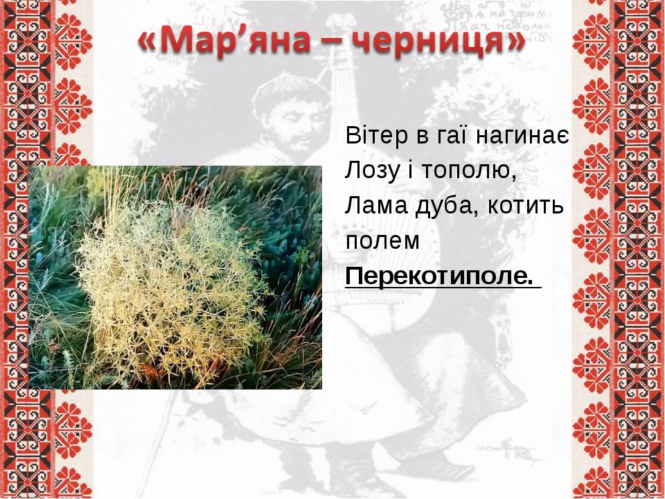 Вітер в гаї нагинає Лозу і тополю, Лама дуба, котить полем Перекотиполе.