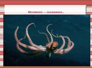 Моллюски — осьминоги...