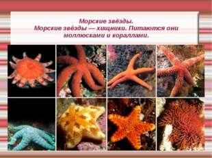 Морские звёзды. Морские звёзды — хищники. Питаются они моллюсками и кораллами.