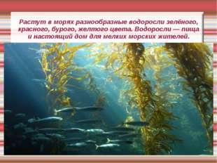 Растут в морях разнообразные водоросли зелёного, красного, бурого, желтого цв