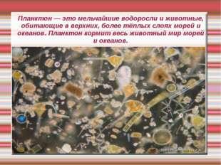 Планктон — это мельчайшие водоросли и животные, обитающие в верхних, более тё