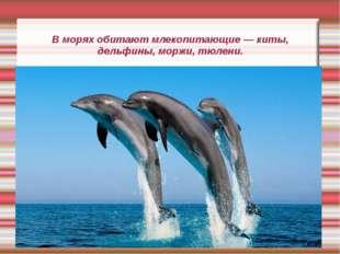 В морях обитают млекопитающие — киты, дельфины, моржи, тюлени.