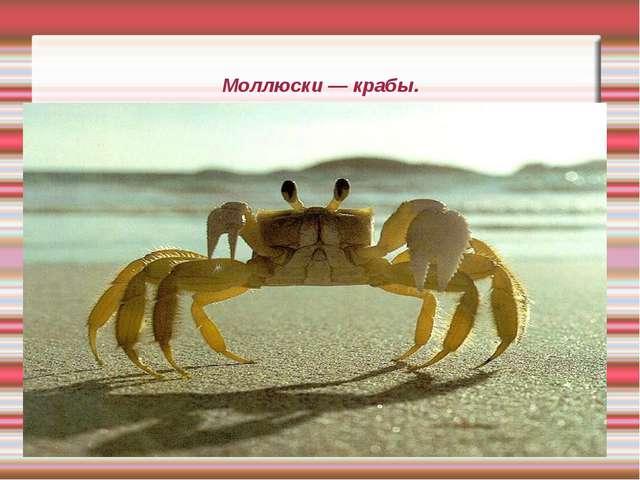 Моллюски — крабы.
