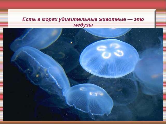 Есть в морях удивительные животные — это медузы