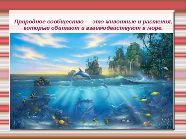 Природное сообщество — это животные и растения, которые обитают и взаимодейст...