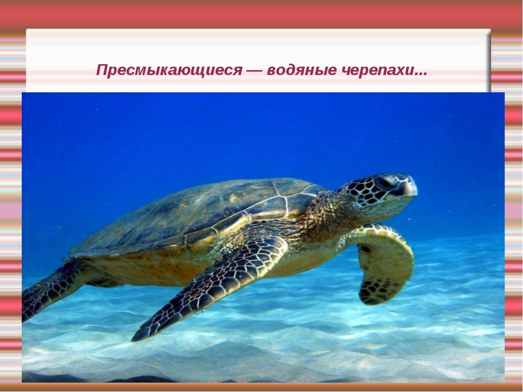 Пресмыкающиеся — водяные черепахи...