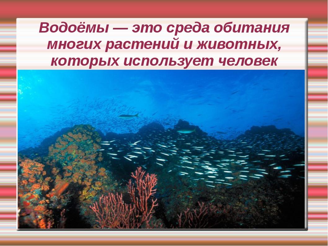 Водоёмы — это среда обитания многих растений и животных, которых использует ч...