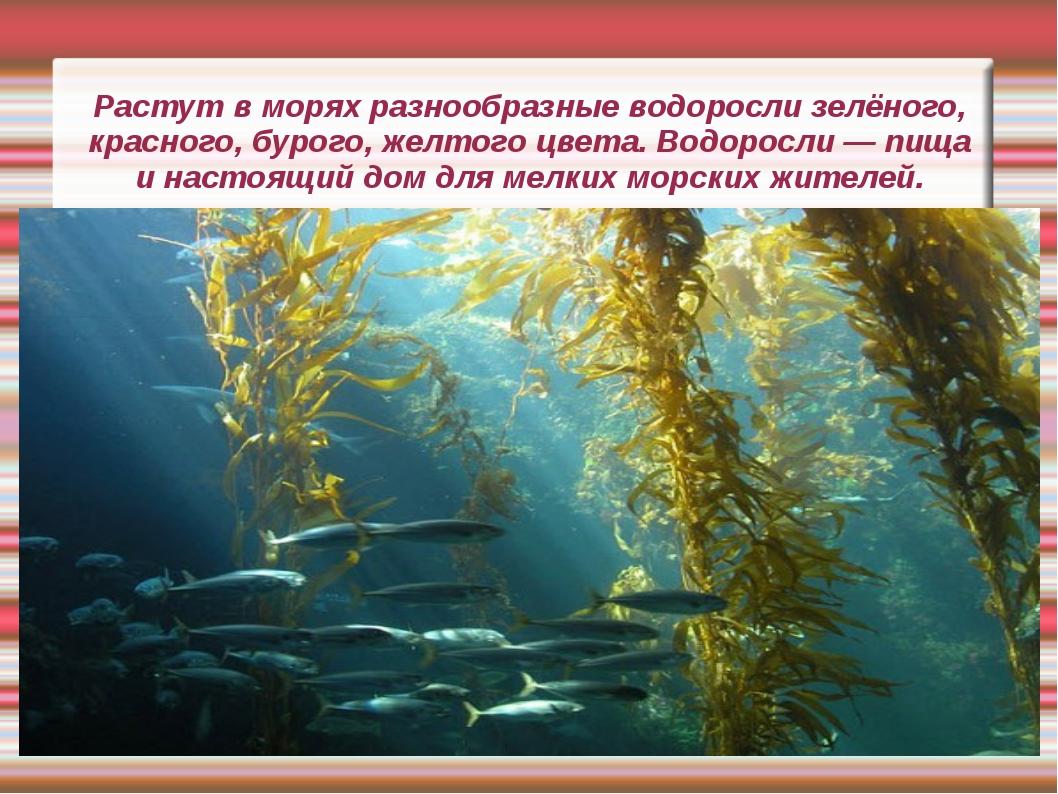 Растут в морях разнообразные водоросли зелёного, красного, бурого, желтого цв...