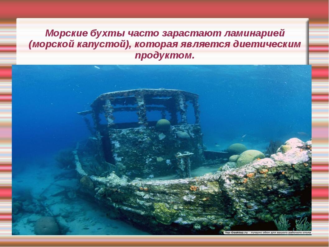 Морские бухты часто зарастают ламинарией (морской капустой), которая является...