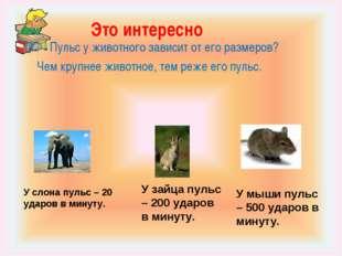 Это интересно Пульс у животного зависит от его размеров? Чем крупнее животное