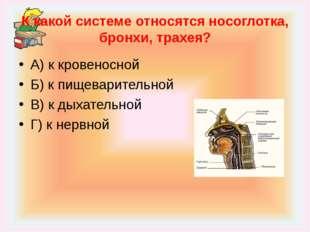 К какой системе относятся носоглотка, бронхи, трахея? А) к кровеносной Б) к п