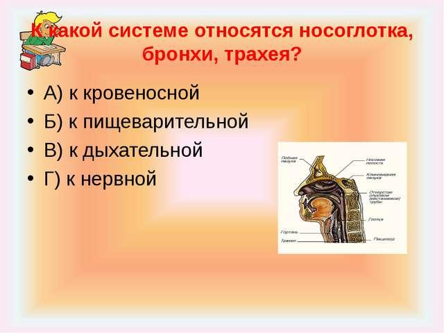 К какой системе относятся носоглотка, бронхи, трахея? А) к кровеносной Б) к п...