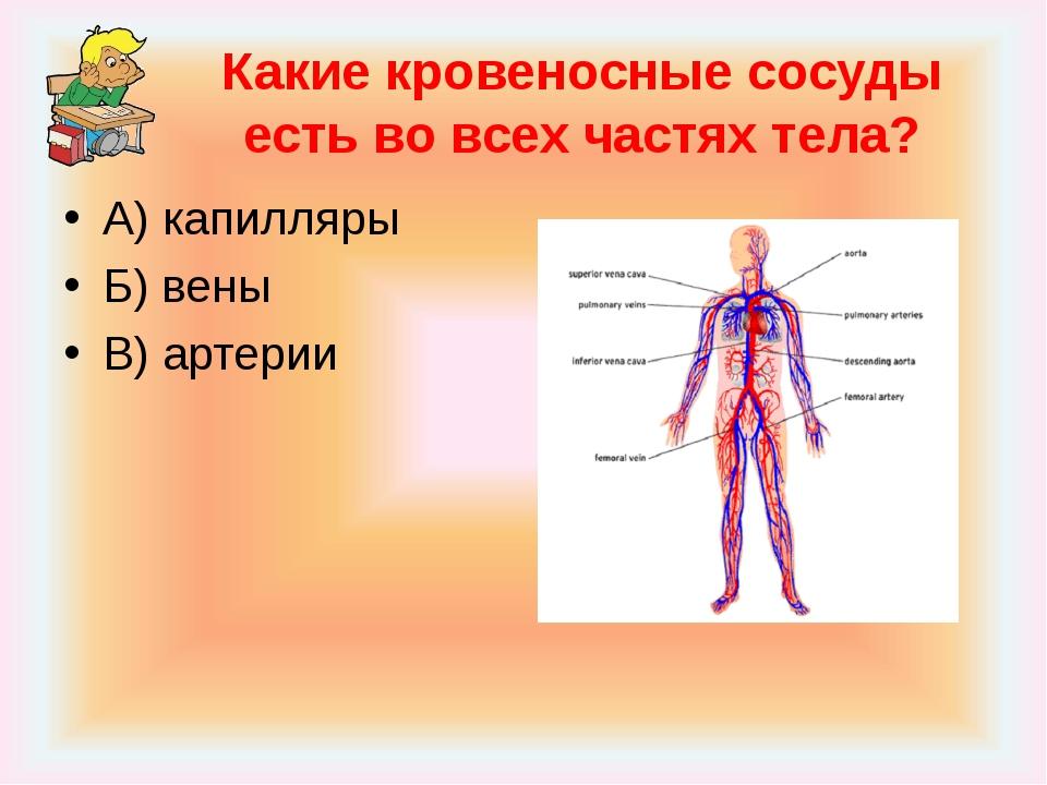 Какие кровеносные сосуды есть во всех частях тела? А) капилляры Б) вены В) ар...