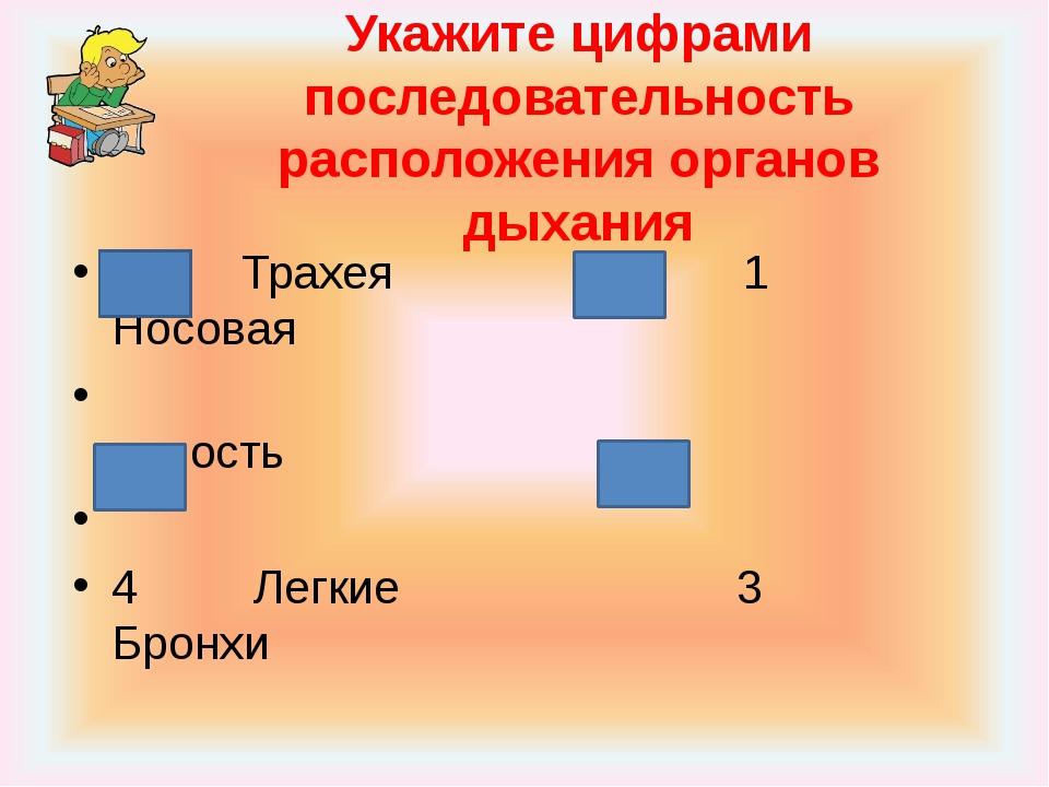 Укажите цифрами последовательность расположения органов дыхания 2 Трахея 1 Но...