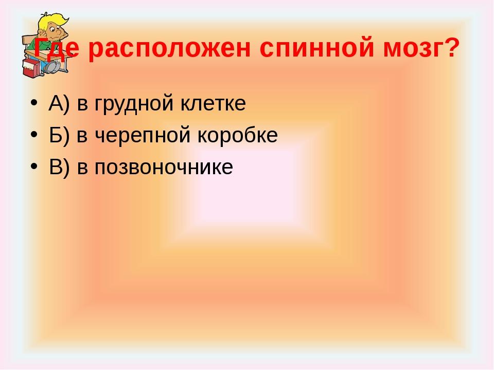 Где расположен спинной мозг? А) в грудной клетке Б) в черепной коробке В) в п...