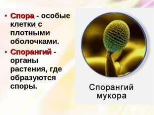 Спора - особые клетки с плотными оболочками. Спорангий - органы растения, где