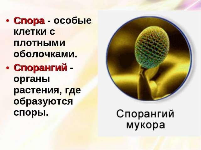 Спора - особые клетки с плотными оболочками. Спорангий - органы растения, где...