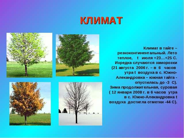 КЛИМАТ Климат в тайге –резкоконтинентальный. Лето теплое, t июля +23…+25 С. И...