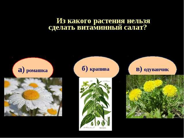 Из какого растения нельзя сделать витаминный салат? Продолжить игру