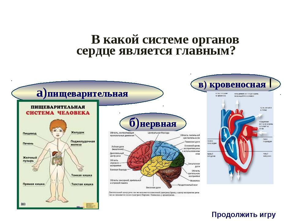 В какой системе органов сердце является главным? Продолжить игру