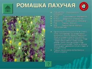 РОМАШКА ПАХУЧАЯ ПОДЦАРСТВО: Высшие растения - Embryophyta ОТДЕЛ: Покрытосемен