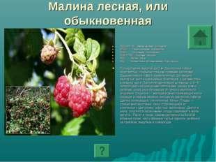 Малина лесная, или обыкновенная ПОДЦАРСТВО: Высшие растения - Embryophyta ОТД