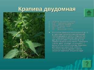 Крапива двудомная ПОДЦАРСТВО: Высшие растения - Embryophyta ОТДЕЛ: Покрытосем