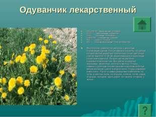 Одуванчик лекарственный ПОДЦАРСТВО: Высшие растения - Embryophyta ОТДЕЛ: Покр