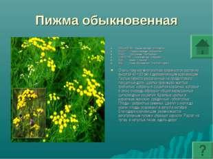 Пижма обыкновенная ПОДЦАРСТВО: Высшие растения - Embryophyta ОТДЕЛ: Покрытосе