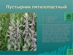 Пустырник пятилопастный ПОДЦАРСТВО: Высшие растения - Embryophyta ОТДЕЛ: Покр