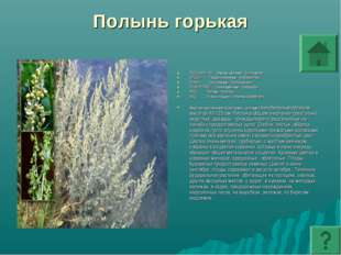 Полынь горькая ПОДЦАРСТВО: Высшие растения - Embryophyta ОТДЕЛ: Покрытосеменн