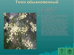 Тмин обыкновенный ПОДЦАРСТВО: Высшие растения - Embryophyta ОТДЕЛ: Покрытосем