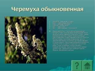 Черемуха обыкновенная ПОДЦАРСТВО: Высшие растения - Embryophyta ОТДЕЛ: Покрыт