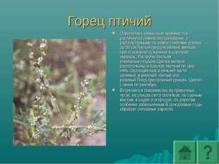 Горец птичий Однолетнее невысокое травянистое растение из семейства гречишных