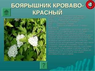 БОЯРЫШНИК КРОВАВО-КРАСНЫЙ ПОДЦАРСТВО: Высшие растения - Embryophyta ОТДЕЛ: По