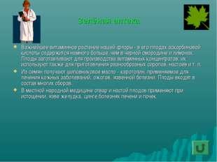 Зелёная аптека Важнейшее витаминное растение нашей флоры - в его плодах аскор