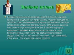 Зелёная аптека Хорошее лекарственное растение, соцветия и плоды издавна приме