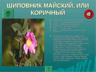 ШИПОВНИК МАЙСКИЙ, ИЛИ КОРИЧНЫЙ ПОДЦАРСТВО: Высшие растения - Embryophyta ОТДЕ